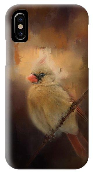 Cardinal In The Evening Light Bird Art IPhone Case