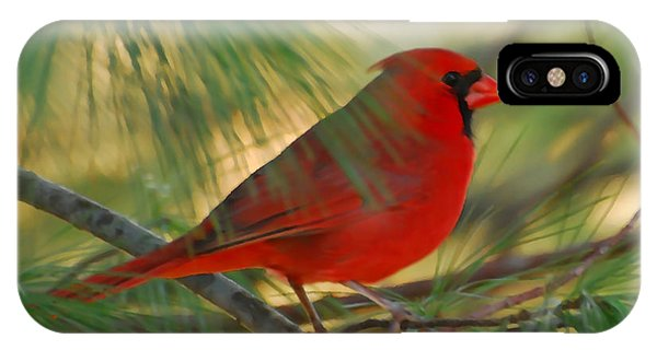 Cardinal In The Pines IPhone Case