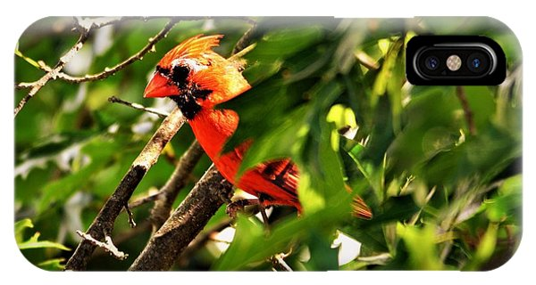Cardinal In Tree IPhone Case