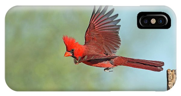 Cardinal On A Mission IPhone Case