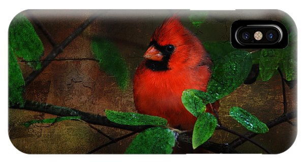 Cardinal IPhone Case