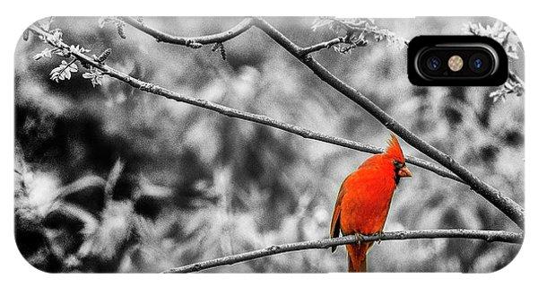 Cardinal... IPhone Case
