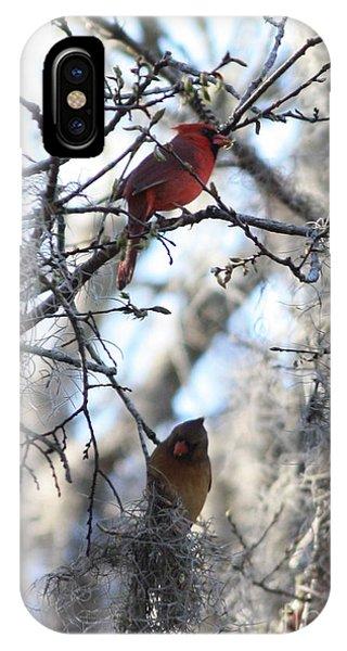 Lovebird iPhone Case - Cardinals In Mossy Tree by Carol Groenen