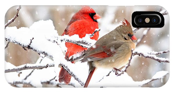 Cardinals In The Winter IPhone Case