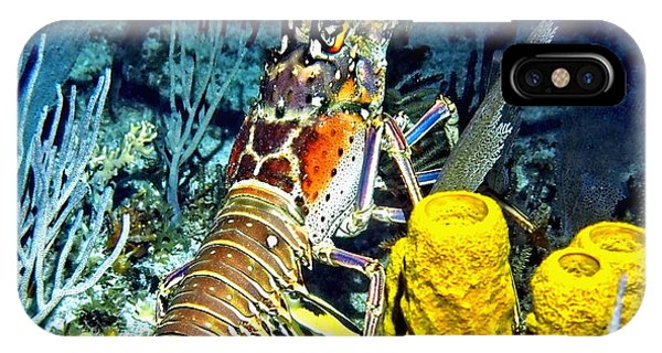 Caribbean Reef Lobster IPhone Case