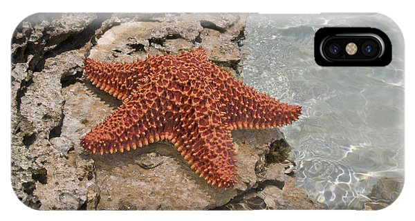 Carribbean iPhone Case - Caribbean Starfish by Betsy Knapp