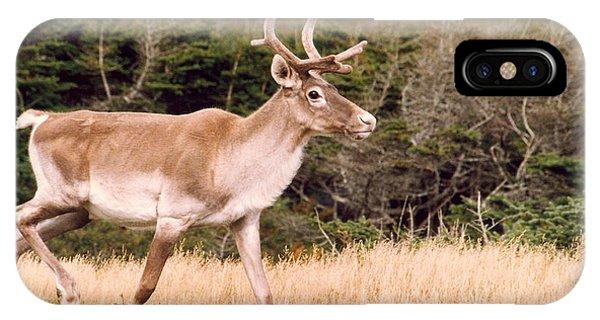 Caribou IPhone Case