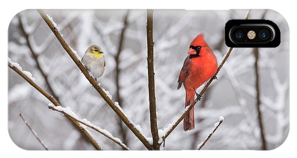 Goldfinch And Cardinal IPhone Case