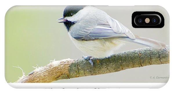 Carolina Chickadee, Animal Portrait IPhone Case
