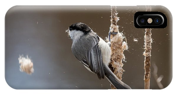 Carolina Chickadee Feeding On Cattail IPhone Case