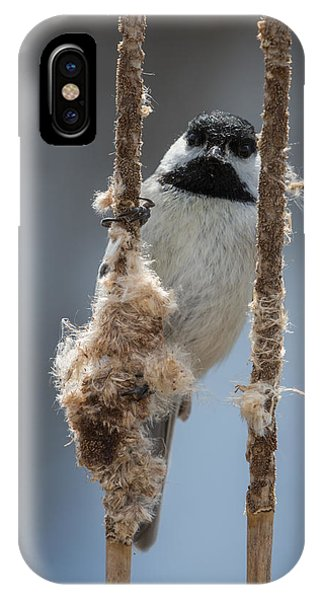 Carolina Chickadee On Cattails IPhone Case