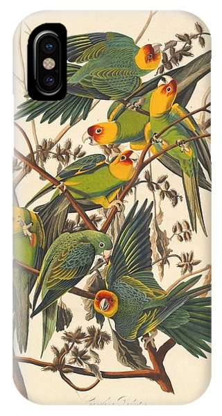 1851 iPhone X Case - Carolina Parrot by Dreyer Wildlife Print Collections