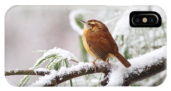 Carolina Wren In Snowy Pine IPhone Case