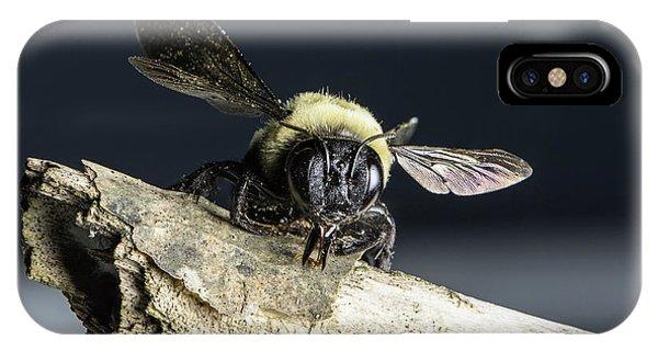 Carpenter Bee IPhone Case
