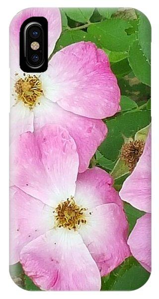 Carpet Roses IPhone Case