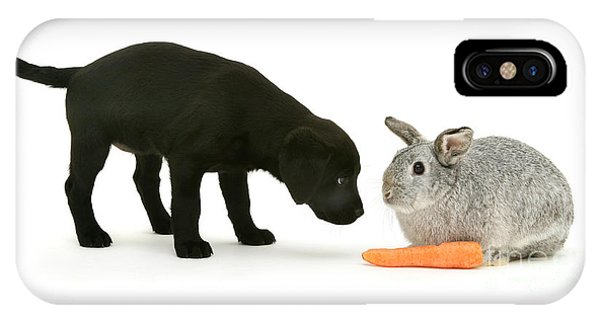 IPhone Case featuring the photograph Carrots Are For Pups, Too by Warren Photographic