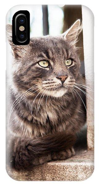 Cat #2480 IPhone Case