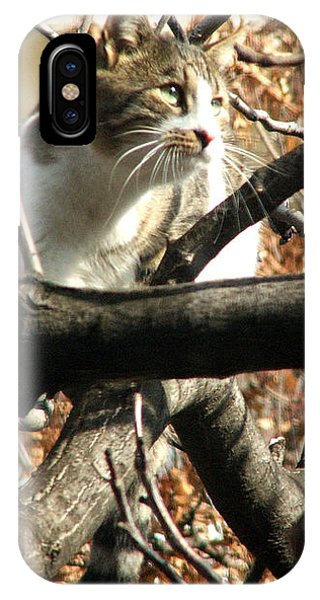 Cat Hunting Bird IPhone Case