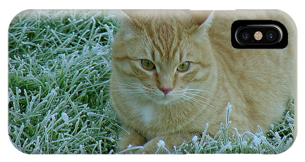 Cat In Frosty Grass IPhone Case