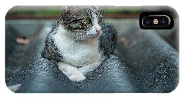Cat In The Cradle IPhone Case