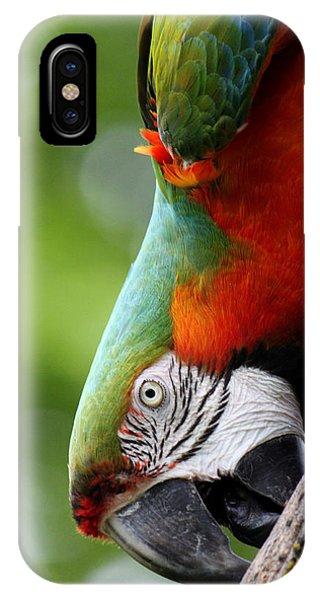 Catalina Macaw II IPhone Case