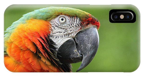 Catalina Macaw IPhone Case