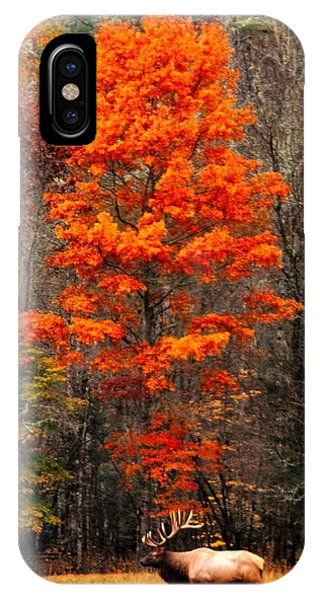 Cataloochee Color IPhone Case