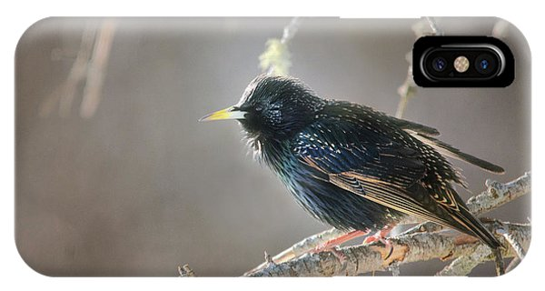 Starlings iPhone Case - Catch The Morning Light by Susan Capuano