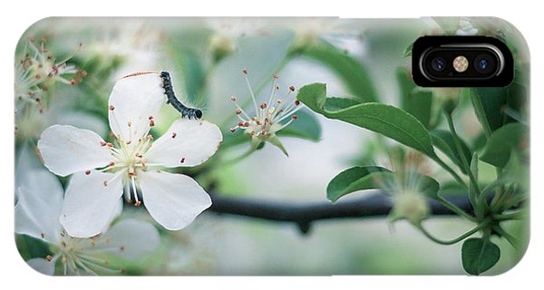 Caterpillar On A Tree Blossom IPhone Case