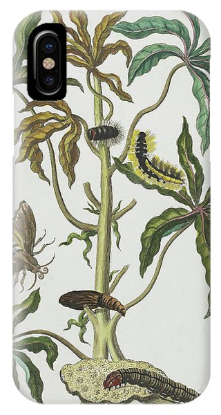 Caterpillar iPhone Case - Caterpillars And Insects With Foliage by Maria Sibylla Graff Merian