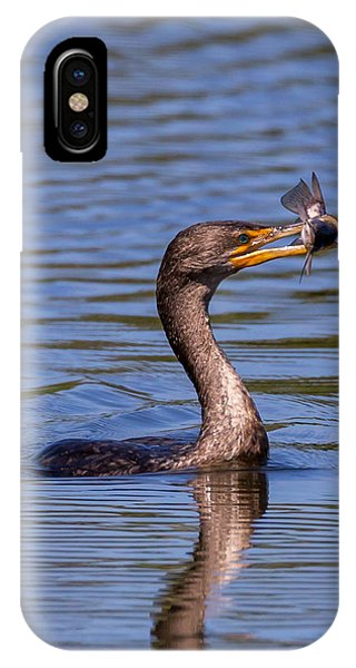 Catfish Dinner IPhone Case