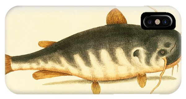 Catfish iPhone Case - Catfish by Mark Catesby