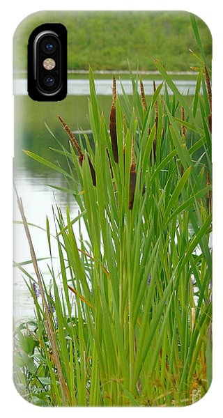 Cattails And Still Water IPhone Case