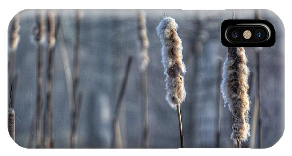 Cattails In The Winter IPhone Case