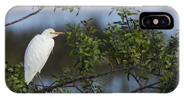 Cattle Egret In The Morning Light IPhone Case
