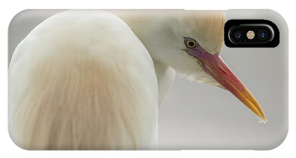 Cattle Egret Profile IPhone Case