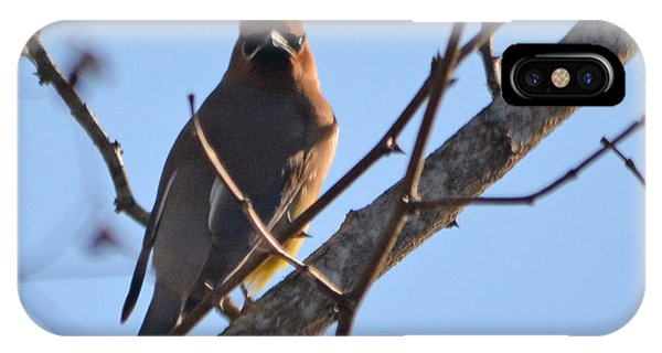 Cedar Wax Wing On The Lookout IPhone Case