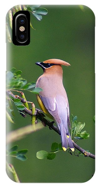 Cedar Waxwing 1 IPhone Case
