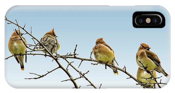 Cedar Waxing iPhone Case - Cedar Waxwings by Geraldine Scull