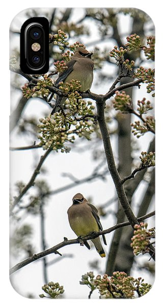 Cedar Waxwings In A Blossoming Tree IPhone Case