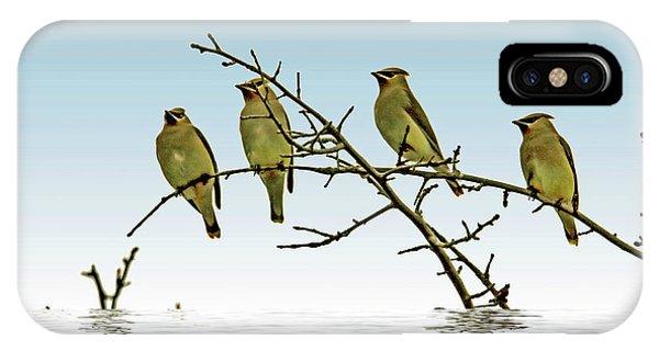 Cedar Waxing iPhone Case - Cedar Waxwings On A Branch by Geraldine Scull