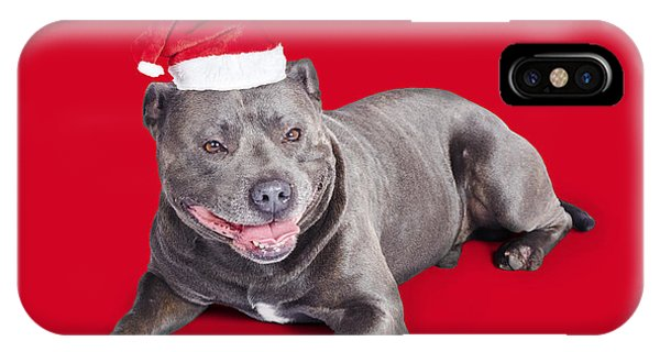 Blue Berry iPhone Case - Celebrating Christmas With A Blue Staffie Dog by Jorgo Photography - Wall Art Gallery