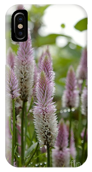 Celosia Spicata...pink Flamingo IPhone Case