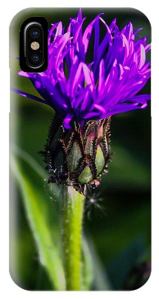 Centaurea Montana 2 IPhone Case