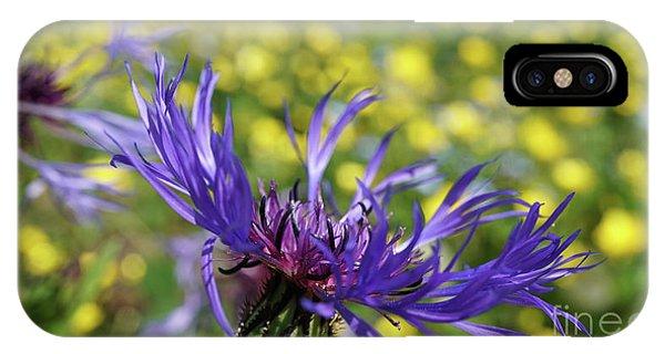 Centaurea Montana Flower IPhone Case