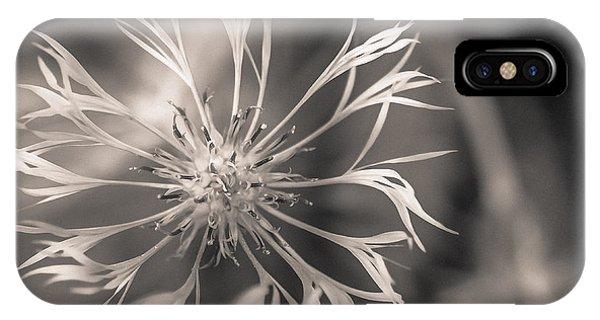 Centaurea Montana IPhone Case