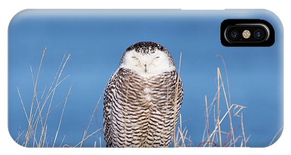 Centered Snowy Owl IPhone Case