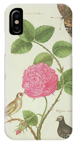 Centifolia Rose, Lavender, Tortoiseshell Butterfly, Goldfinch And Crested Pigeon IPhone Case