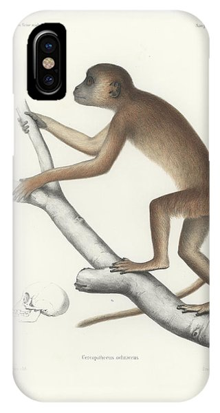 IPhone Case featuring the drawing Central Yellow Baboon, Papio C. Cynocephalus by J D L Franz Wagner