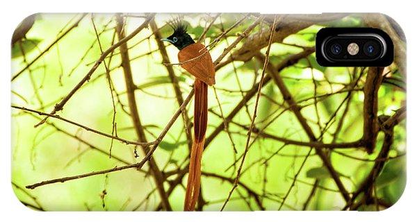 Ceylon Paradise Flycatcher IPhone Case
